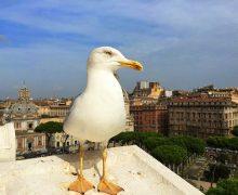 Natura verde a Roma, una realtà sorprendente