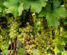 Come si gusta e riconosce un buon vino